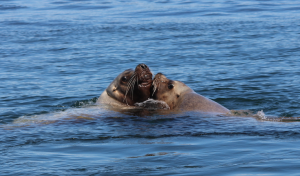 Friendly Sea Lions